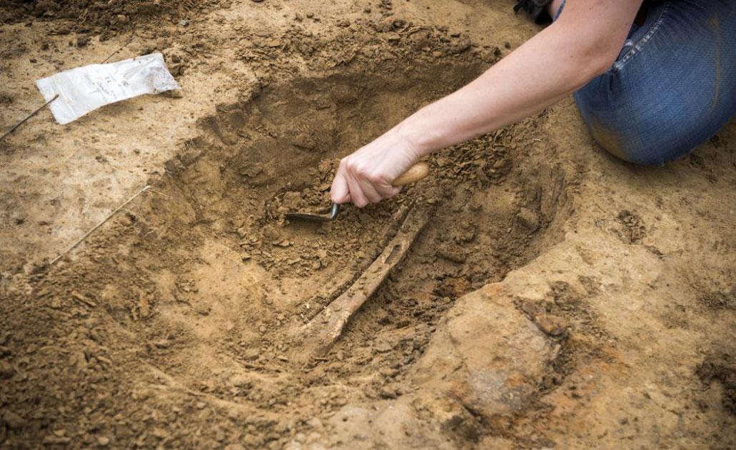 Uno de los huesos de la pierna humana que se está excavando en el Hospital de Campo de Mont-Saint-Jean. Fuente: Chris van Houts / Waterloo al descubierto.