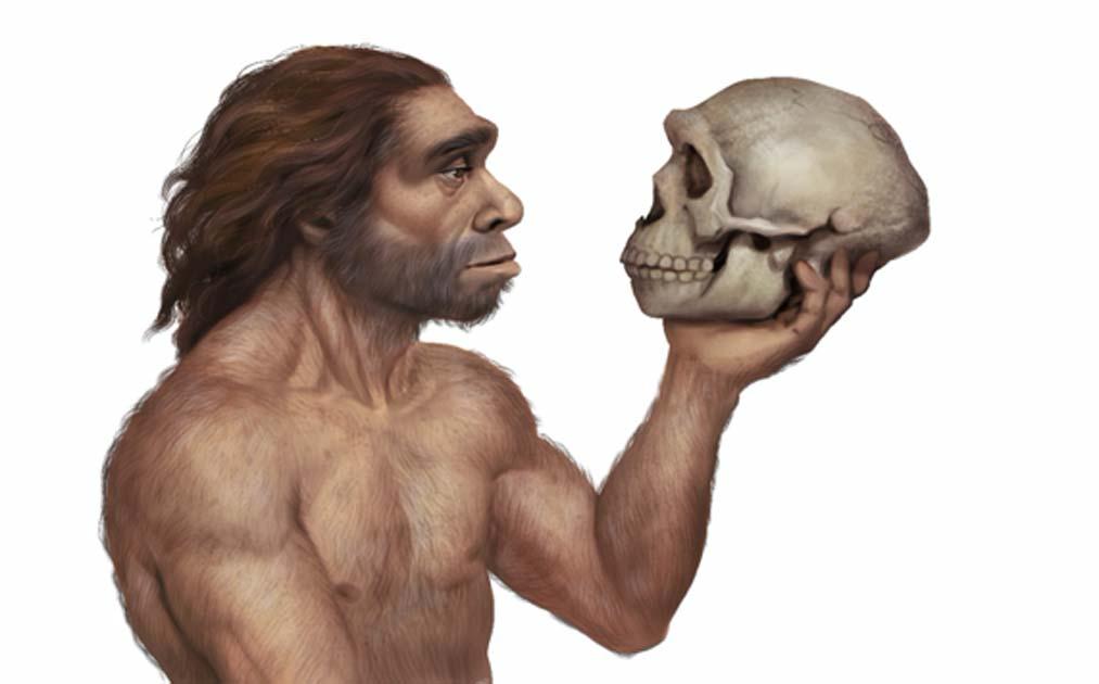 Ilustración del hombre de Neanderthal con el cráneo de Neanderthal Fuente: Roni / Adobe Stock