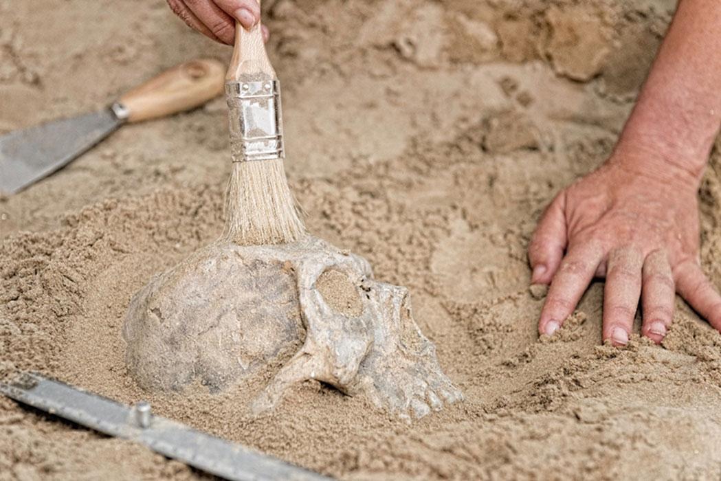 Imagen representativa del descubrimiento de un cráneo (no de Denisovan)