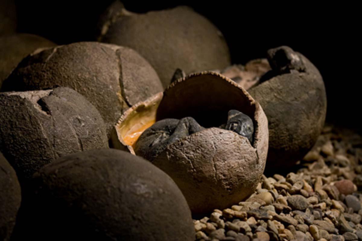 Imagen representativa de huevos de dinosaurio. Crédito: KtD / Adobe Stock
