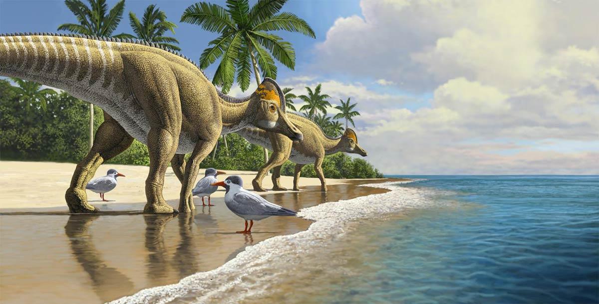 Los dinosaurios pico de pato evolucionaron en América del Norte y luego se extendieron a América del Sur, Asia, Europa y finalmente, África.
