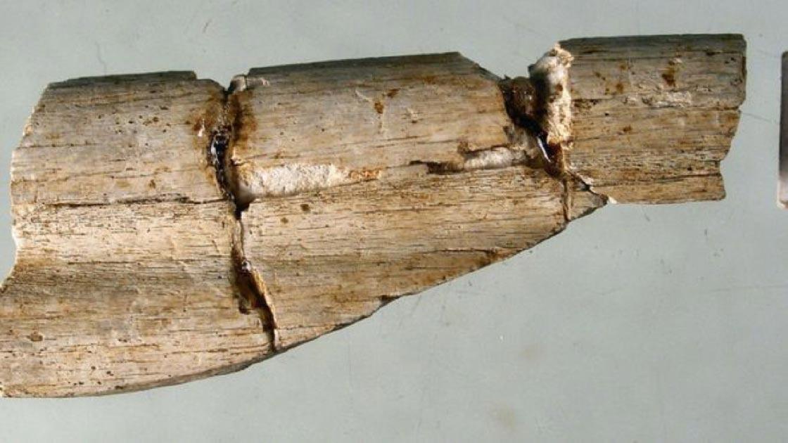Los restos humanos son el primer residente conocido de Durham. Fuente: Universidad de Durham
