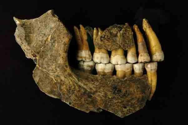 La mandíbula neandertal europea encontrada en la Cueva del Espía, Bélgica y probada con radiocarbono con la última tecnología de la Universidad de Oxford.