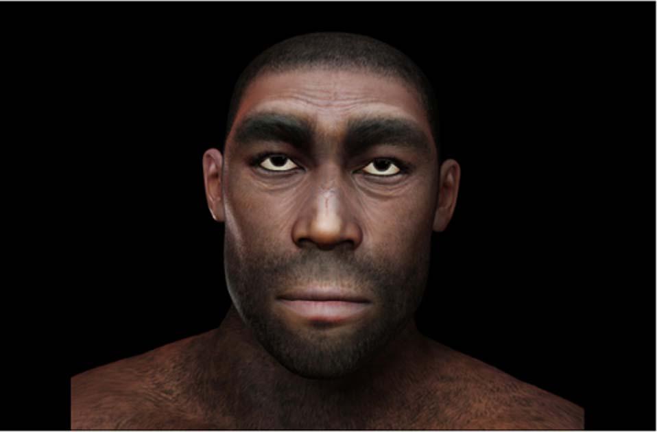 Representación del homo erectus. Fuente: crimson