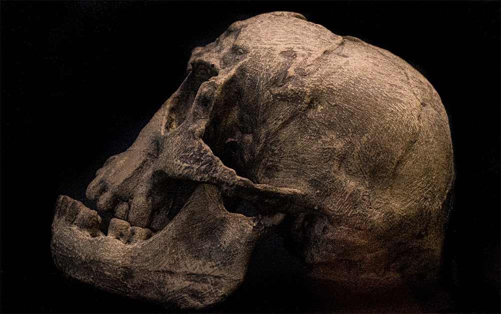 El cráneo de Homo floresiensis descubierto en la cueva de Liang Bua. Fuente: Gerdie/ Adobe Stock