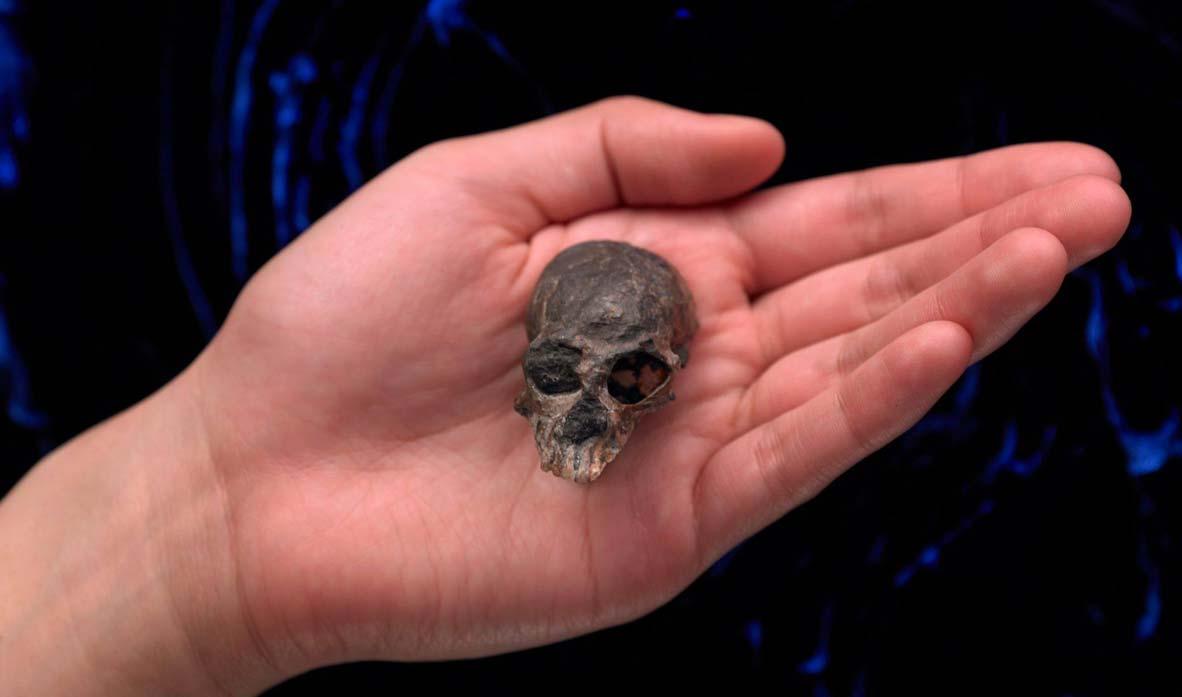 cráneo de 20 millones de años descubierto en las montañas de los Andes de Chile. Fuente: AMNH / Facebook .