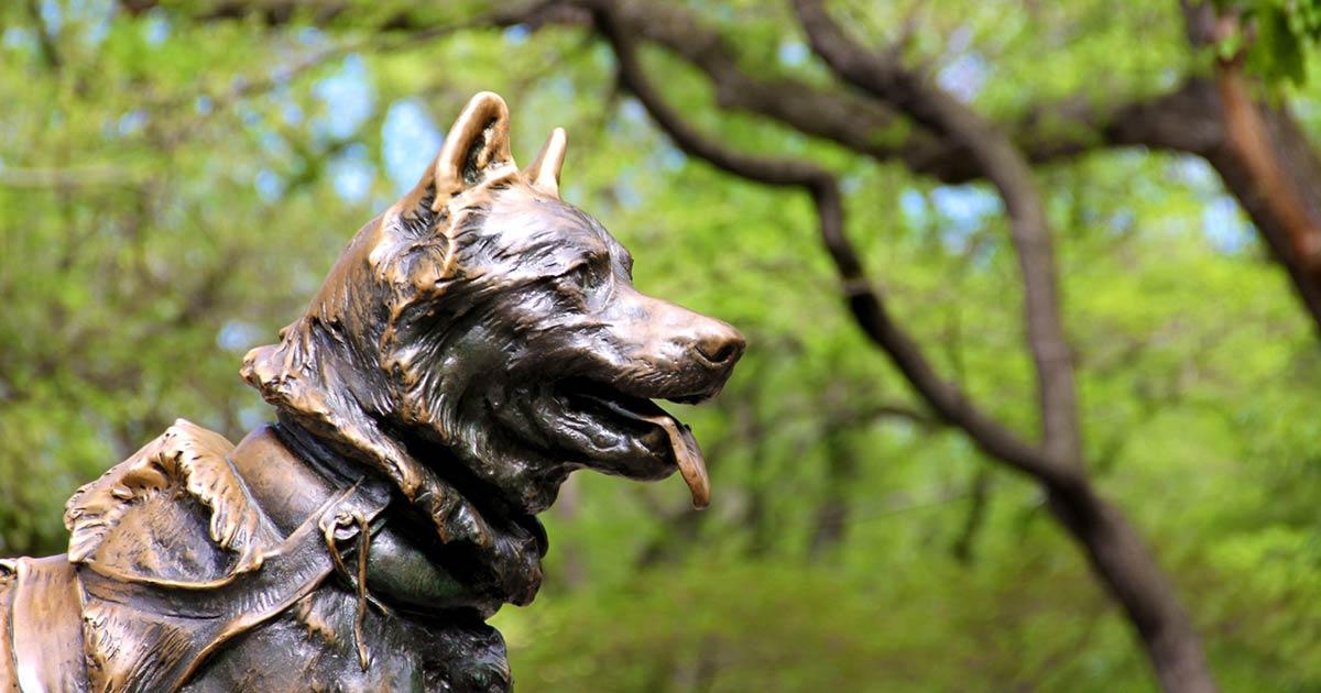 Uno de los perros más famosos de la historia es Balto, conocido por ayudar a la gente de Nome en Alaska, al traer la muy necesaria vacuna contra la difteria en medio de las tormentas invernales de Alaska. Aquí se le puede ver en una estatua dedicada a su memoria en Central Park, Nueva York.