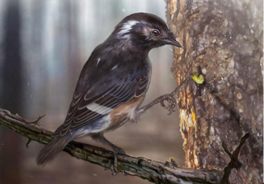 Impresión de los artistas del ave con un tercer dedo del pie un 41% más largo que el segundo dedo del pie. Fuente: Zhongda Zhang / Biología actual