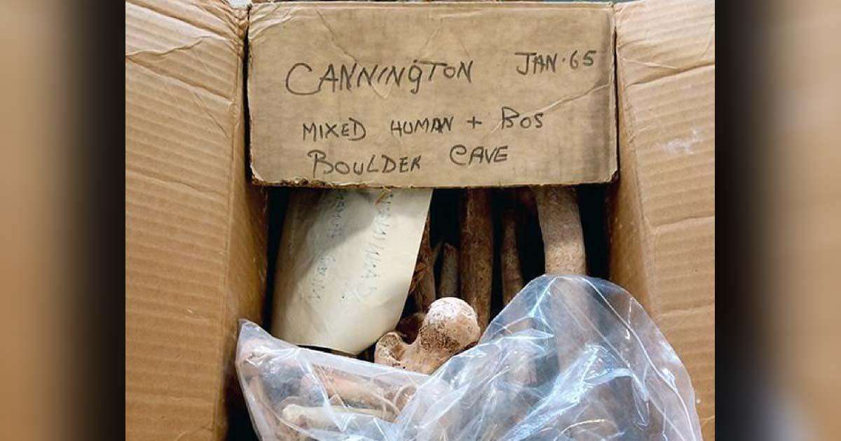 la caja de huesos mesolíticos fue redescubierta en el Somerset Heritage Center cerca de Taunton. Fuente: Cotswold Archaeology