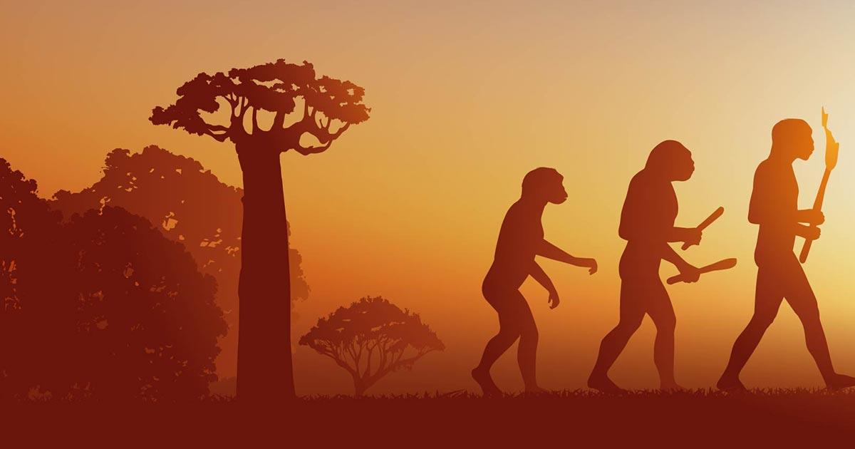 Un nuevo estudio encuentra que tres especies humanas diferentes vivían juntas. Fuente: pict rider / Adobe Stock.