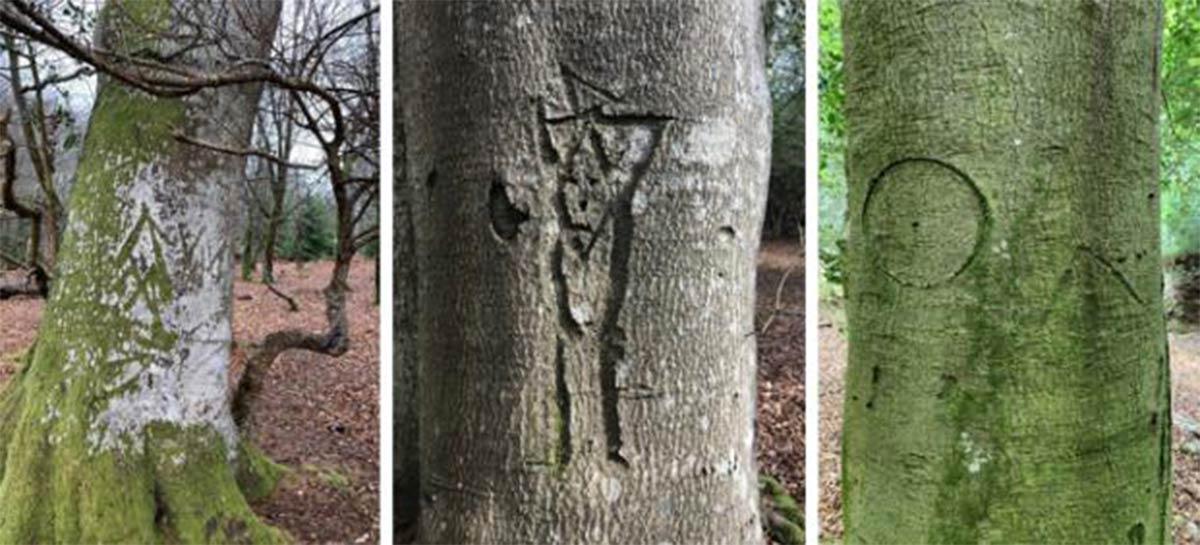 ejemplos de la marca de un rey, una persona y una marca de bruja talladas en árboles en New Forest, Hampshire, Inglaterra.