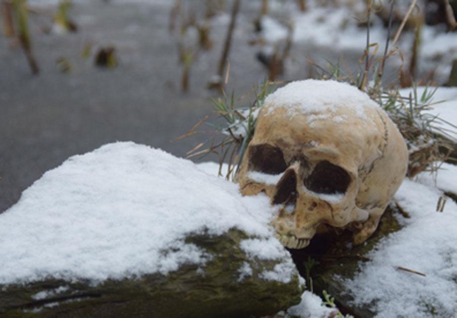 Cráneo en la nieve. Crédito: Antje / Adobe Stock