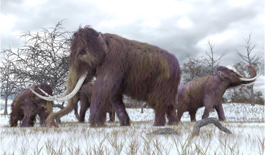 La estructura del hueso de mamut data de alrededor de 24,000 a. C. Fuente: auntspray/ Adobe Stock