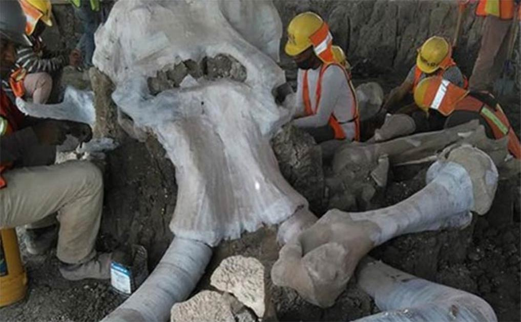 Arqueólogos que trabajan en el enorme sitio del esqueleto de mamut o en el área de la trampa de mamut en México