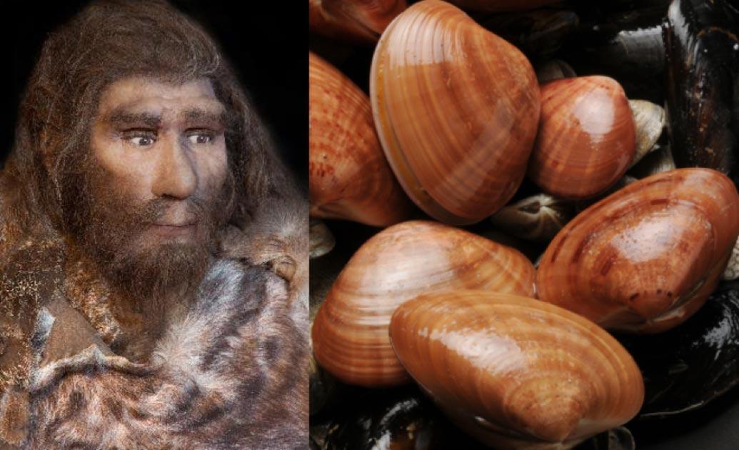 Imagen de Portada: Las herramientas de neandertal incluían raspadores de conchas. Fuente: procy_ab & Comugnero Silvana / Adobe Stock