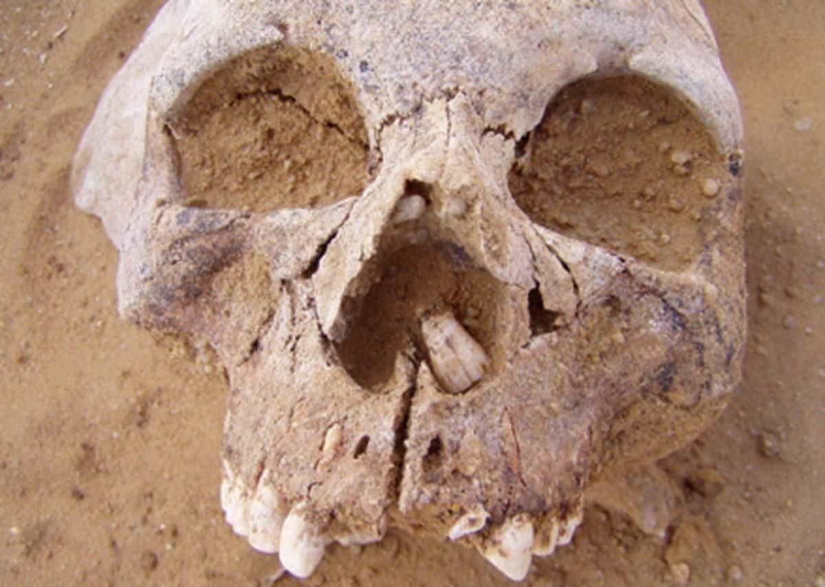 Ejemplo de cráneo de personas neolíticas. Fuente: (Autor proporcionado / La conversación)