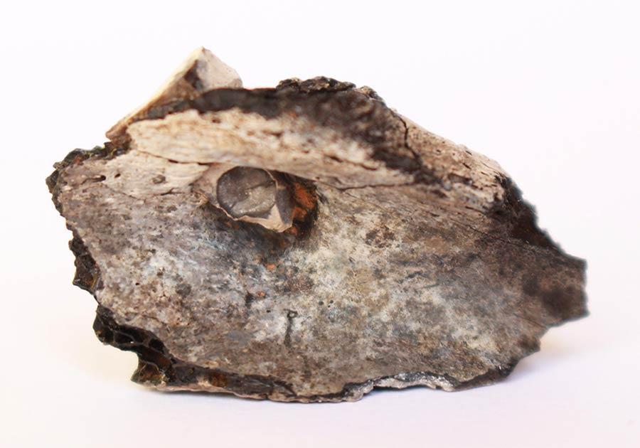 Desde el sitio arqueológico de la cremación más antigua conocida en el Medio Oriente encontrada en Israel.