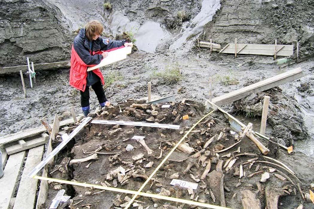 dos hombres encontrados en el sitio de Yana Rhinoceros Horn en el norte de Siberia, en Rusia, datan de hace unos 32,000 años, lo que proporciona la evidencia más temprana y directa de humanos en la región. Fuente: Elena Pavlova