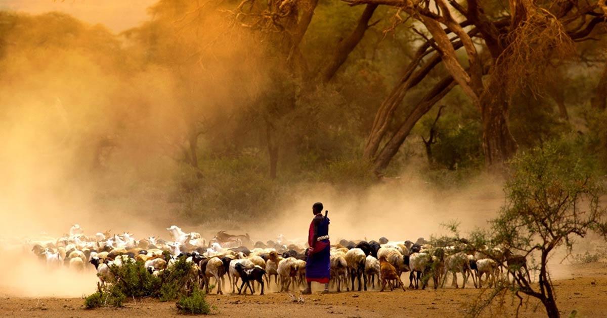 El ADN antiguo muestra movimientos e interacciones alentadas por el pastoralismo en África. Fuente: kubikactive / Adobe Stock