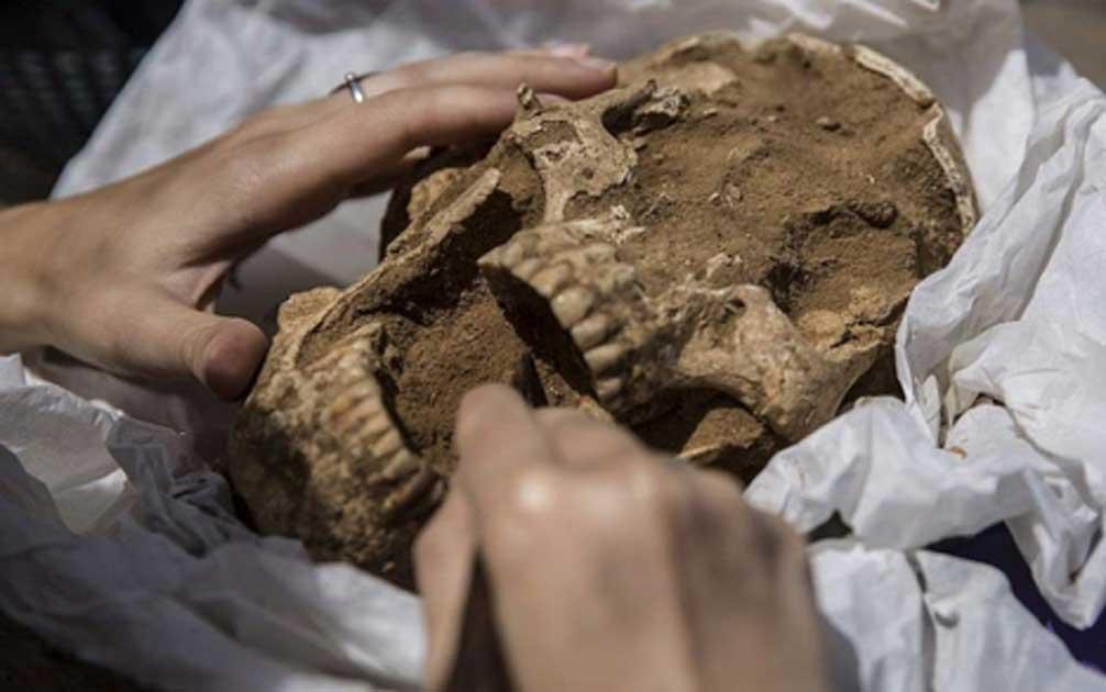 un cráneo de un entierro del siglo 10 al 9 a.C en la excavación del cementerio filisteo en Ashkelon. Una nueva investigación sobre el ADN filisteo revela sus orígenes en el sur de Europa. Fuente: : Tsafrir Abayov/Leon Levy Expedition
