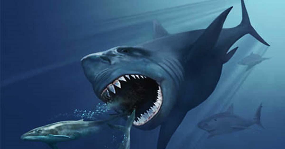 Representación artística de un Megalodón que persigue a dos ballenas Eobalaenoptera.