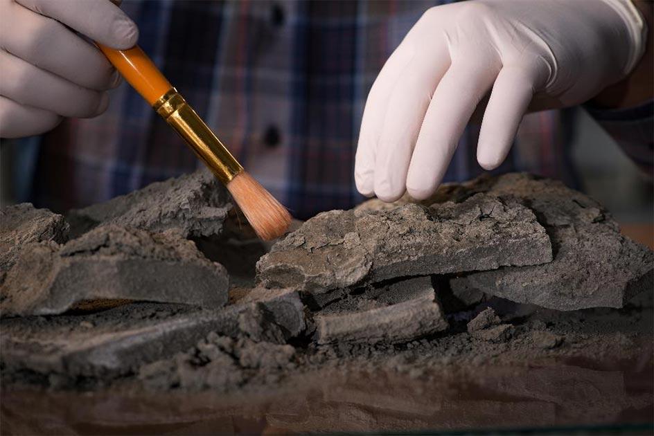 La datación por radiocarbono necesita un ajuste preciso si los científicos y los arqueólogos desean una cronología histórica más precisa. Fuente: Elnur / Adobe Stock