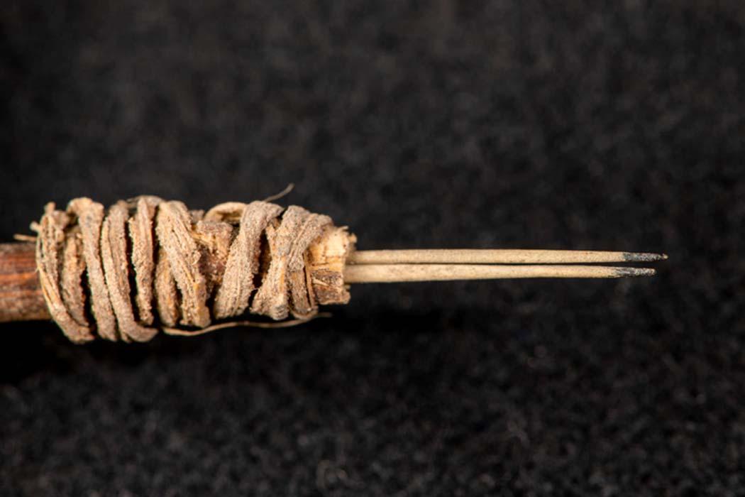 Una herramienta de tatuaje nativo americano de 2.000 años de cactus, descubierta por el arqueólogo de WSU Andrew Gillreath Brown.