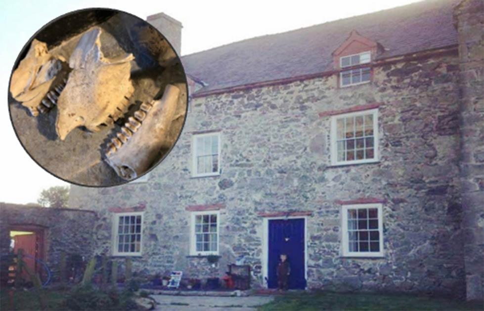 La casa de la guarida de brujería de Gales medieval vista desde el exterior. Fuente: Kerrie Jackson / Consejo del condado de Denbighshire. Recuadro: El cráneo de un caballo también fue parte de los hallazgos de la guarida de brujería galesa. (Consejo del condado de Kerrie Jackson / Denbighshire)