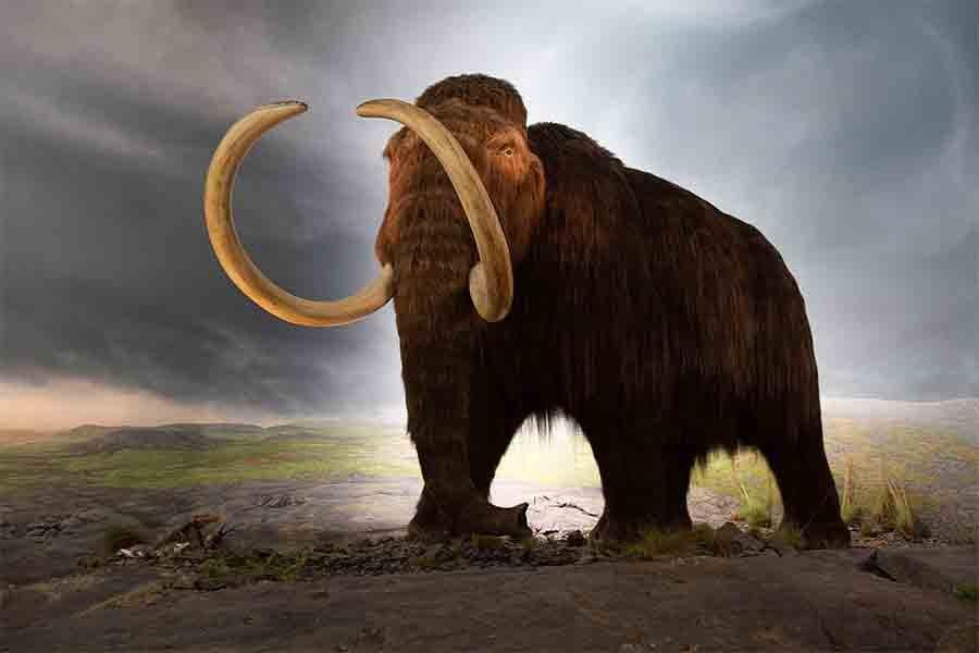 El descubrimiento de un hueso de mamut lanudo olvidado hace mucho tiempo puede probar que los humanos y los mamuts lanudos coexistieron en el noreste de Estados Unidos.