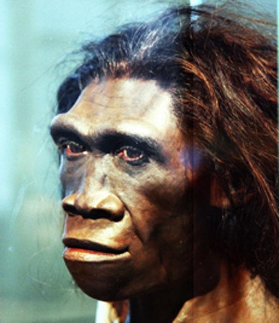 El Homo erectus pudo haber cazado los pájaros gigantes. (Tim Evanson / CC BY-SA 2.0)