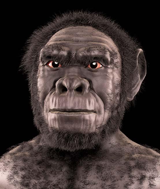 Homo habilis: reconstrucción / aproximación facial forense. (CC BY-SA 3.0)