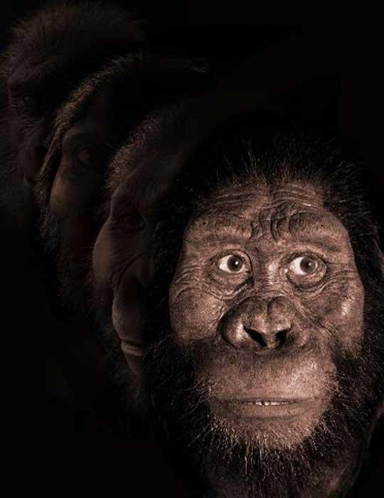 Fotomontaje de antepasados humanos por Jennifer Taylor, cortesía del Museo de Historia Natural de Cleveland. La reconstrucción facial de John Gurche fue posible gracias a la generosa contribución de Susan y George Klein.