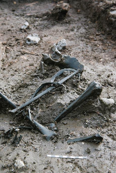 Los huesos recién descubiertos pertenecían a una mujer de algo más de veinte años. Foto: Jacob Due/Museo Moesgaard