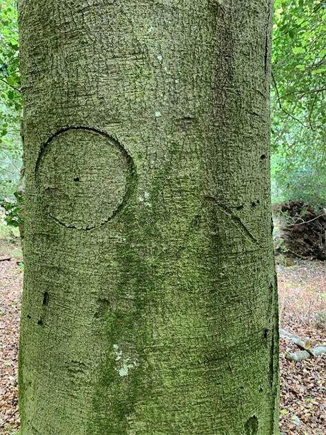 Una marca de bruja tallada en uno de los árboles. (Parque Nacional New Forest)