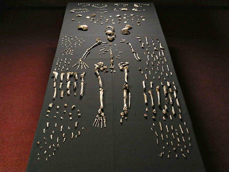 Muestra de restos óseos de Homo Naledi recuperados en una cueva sudafricana. (Fotografía: Independent)