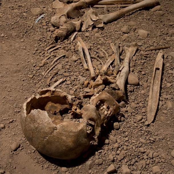 Los investigadores utilizaron ADN genómico extraído de los restos esqueléticos de un individuo masculino asociado con la cultura Neolítica de Hacha de Batalla para tratar de comprender la ascendencia genómica de la cultura escandinava y su relación con la cultura más amplia de Corded Ware. (Jonas Karlsson / Museo Östergötlands)