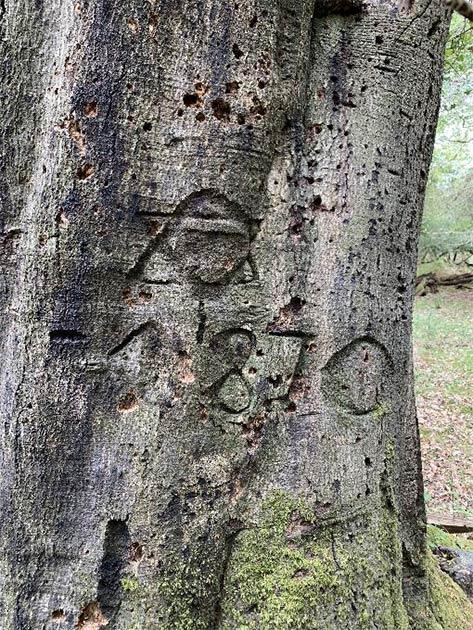 Grafiti de árboles de 1870 (Parque Nacional New Forest)