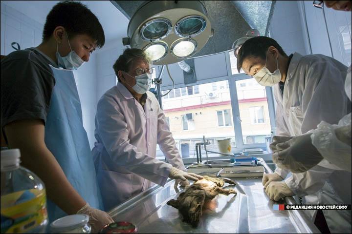 La necropsia tuvo lugar en el Instituto de Medicina de la Universidad Federal del Noreste de Yakutsk. Foto: NEFU