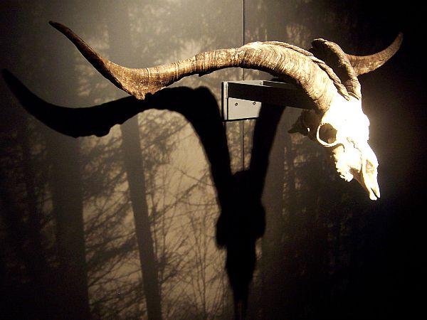 Calavera de macho cabrío, animal que representa la personificación del demonio en aquelarres y reuniones de brujas. (Flickr)