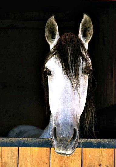 Los complejos movimientos faciales de los caballos se parecen a los de los humanos (Flickr)