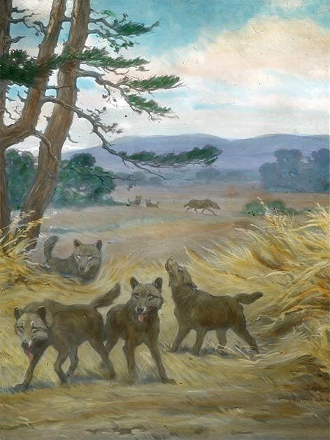 """""""Los lobos temibles a veces son retratados como criaturas míticas, pero la realidad resulta ser aún más interesante"""". (Dominio público)"""