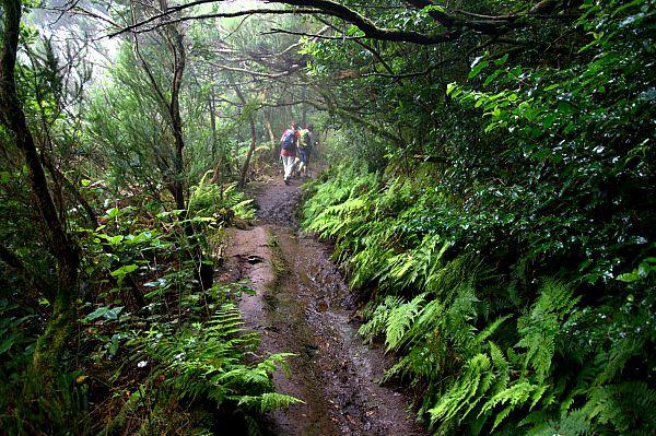 Camino de las Vueltas, Macizo de Anaga, isla de Tenerife (Flickr)