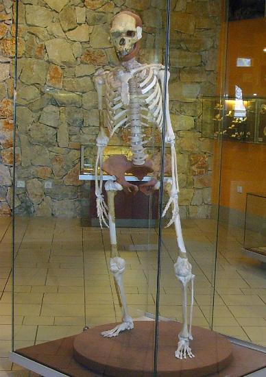 Esqueleto reconstruido del Hombre de Tautavel (Wikimedia Commons)
