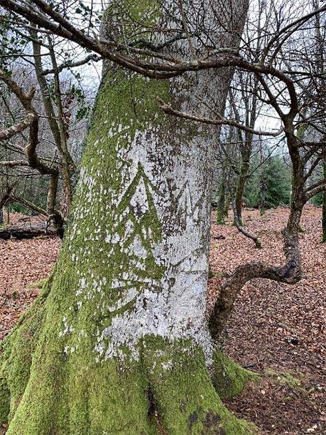 La marca del rey en uno de los árboles de New Forest, Hampshire, Inglaterra. (Parque Nacional New Forest)