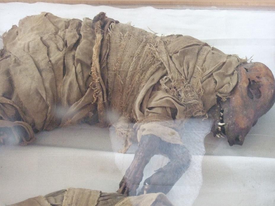 Perro momificado, Museo Escuela Taggart, Assuyt, Egipto Medio