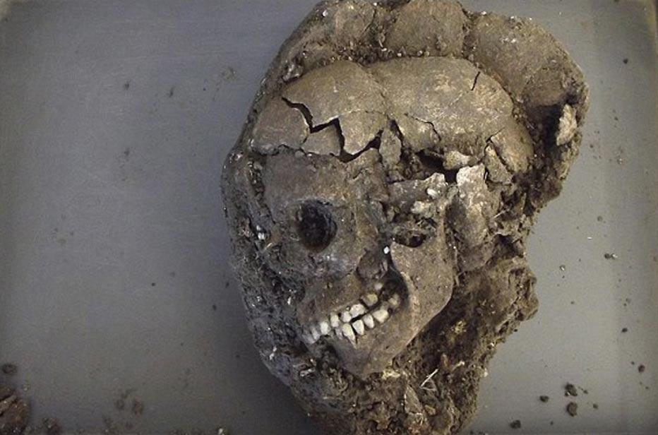 El cráneo del adolescente de Marden Henge después de ser desenterrado (Daily Mail)