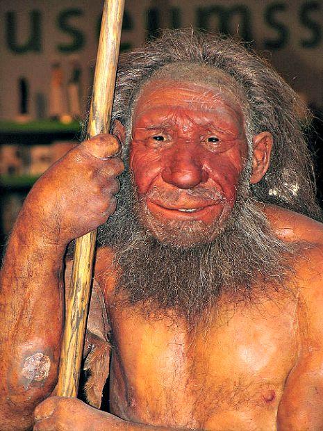 Modelo de un neandertal expuesto en el Museo del Neandertal de Düsseldorf (Wikimedia Commons)