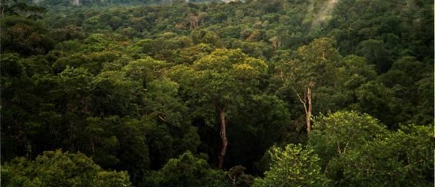 La inexplorada selva del Amazonas en Brasil, en la que Percy Fawcett dirigió numerosas expediciones (Wikimedia Commons)