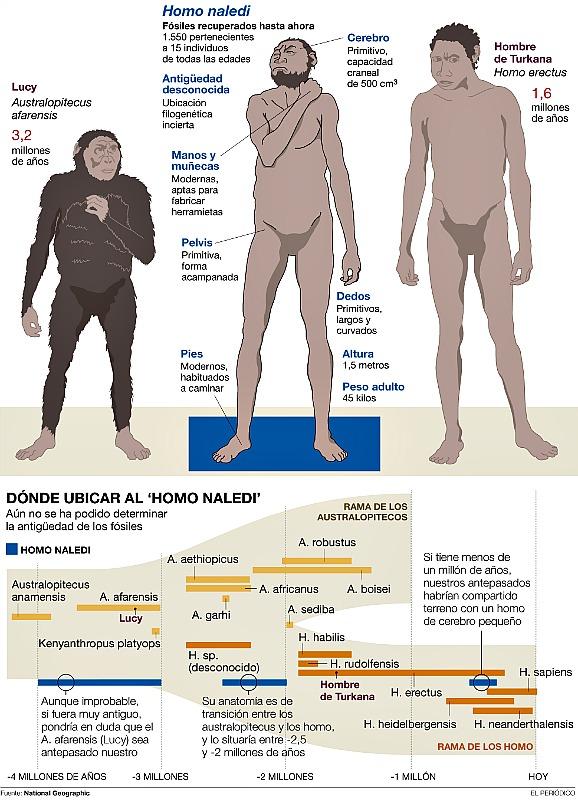 Comparativa-Homo-Naledi-Homo-Erectus-Australopithecus