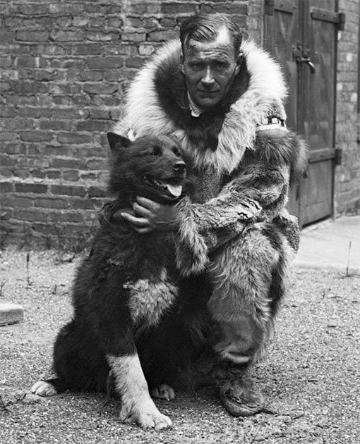 Balto se convirtió en un perro famoso después de entregar con éxito antitoxina diftérica a Nome en Alaska en 1925. El perro líder del tramo final de la expedición, se le puede ver aquí con Gunnar Kaasen, el musher del último equipo. (Dominio público)